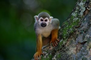 exotic coffee - thanks to Civet monkeys from southeast Asia